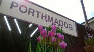 Porthmadog Station Sign and Tulips
