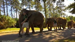 Elephants at ZSL Whipsnade Zoo