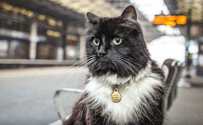 Felix - Huddersfield Station Cat