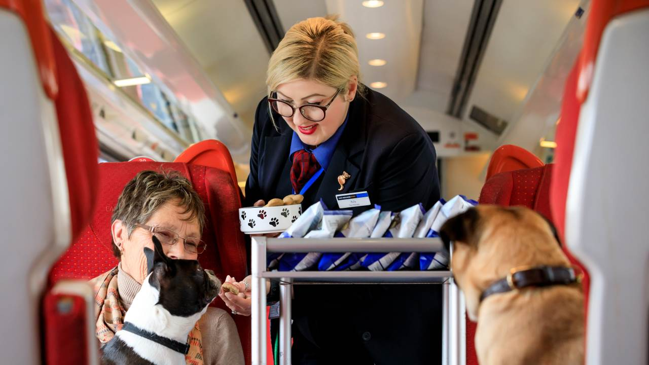 East Midlands Trains, dogs on board.