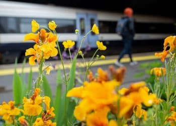 Southeastern Station gardens come to bloom