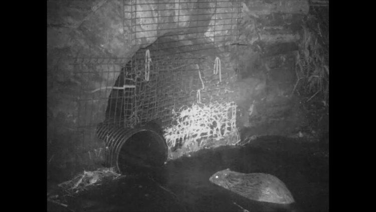 Beavers still image