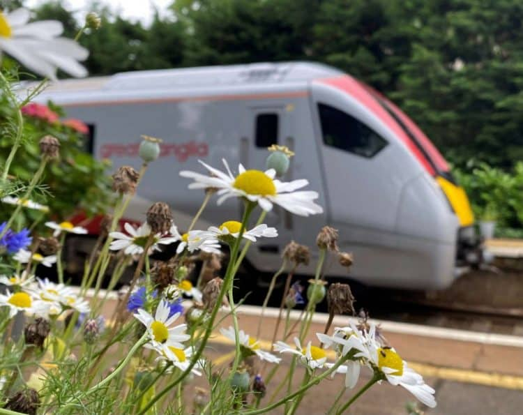 new train and daisies brundall gardens
