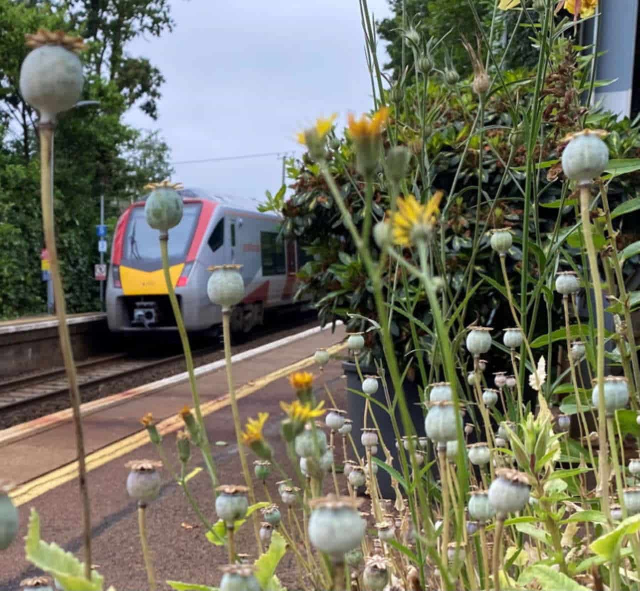Brundall Gardens Station