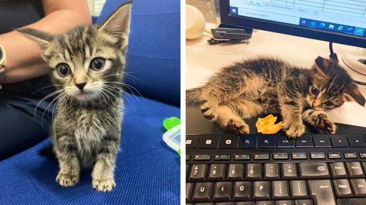 rossCountry Kitten composite